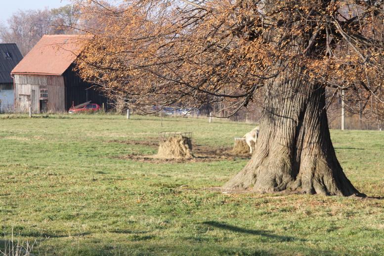 2011-11-12-15-08-17-img_8342