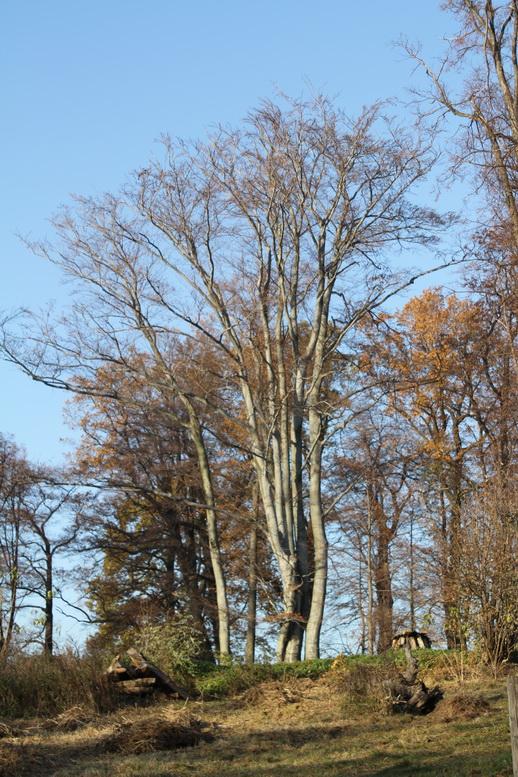 2011-11-12-15-31-38-img_8369